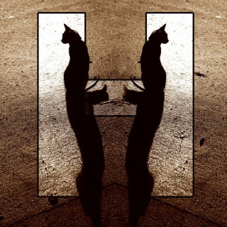 Letter H with mirror cats